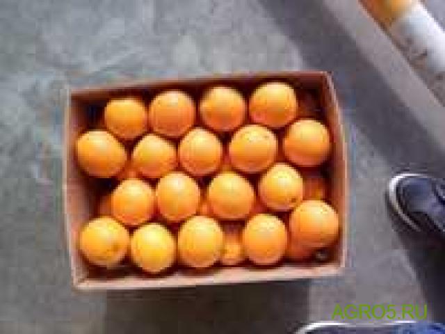 Апельсины высокого качества