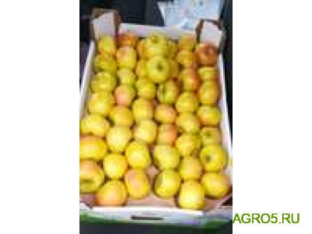 Яблоки новый урожай