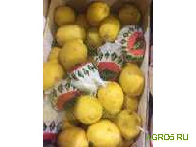 Лимоны высокого качества