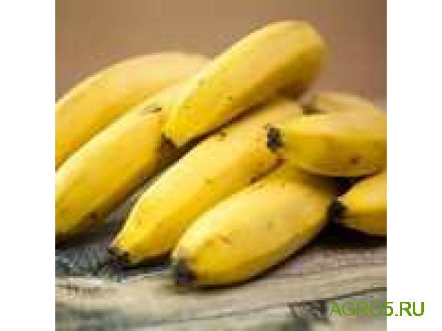 Бананы новый урожай