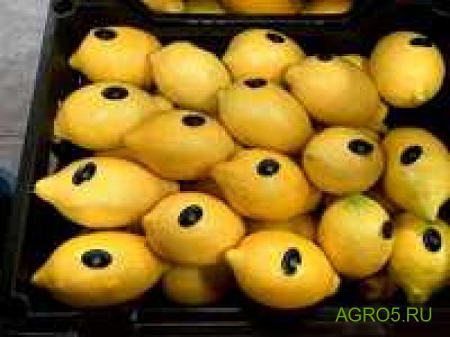 Лимоны продам