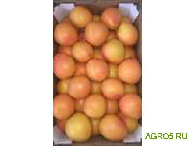 Грейпфрут высокого качества
