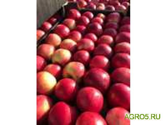 Яблоки сезон 2020