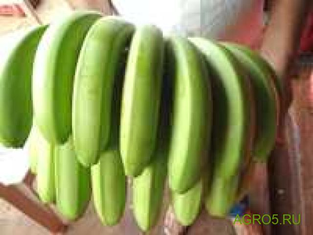 Бананы продам