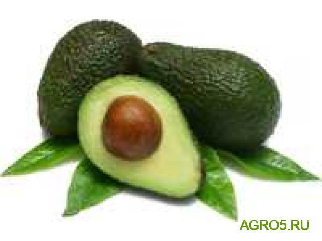 Авокадо новый урожай