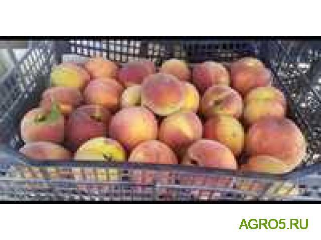 Персики высокого качества