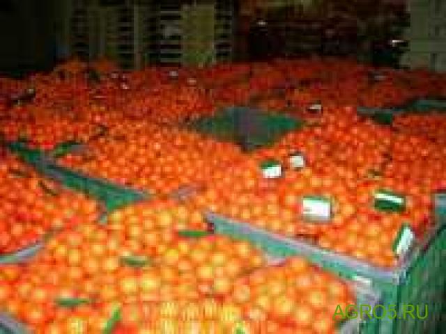 Мандарины новый урожай