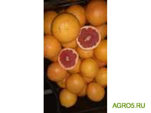 Грейпфрут продам