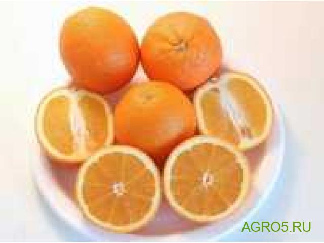 Апельсины сезон 2020