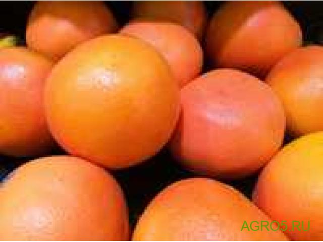 Грейпфрут новый урожай