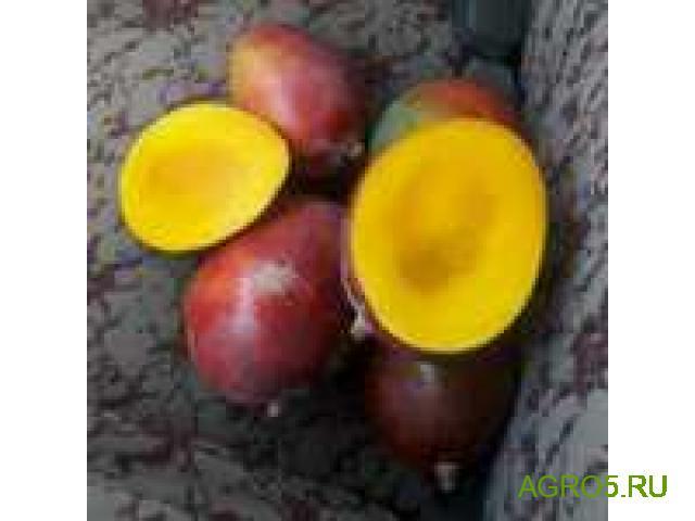 Манго новый урожай