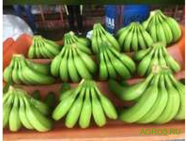 Бананы высокого качества