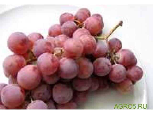 Виноград в Туле