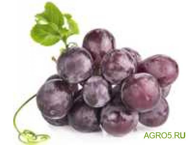 Виноград в Кропоткине