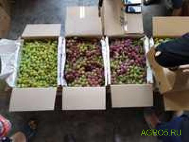 Виноград в Ейске