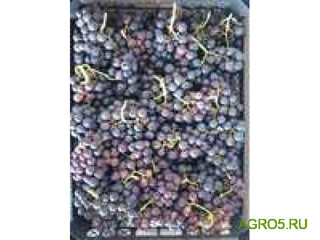 Виноград в Крымске