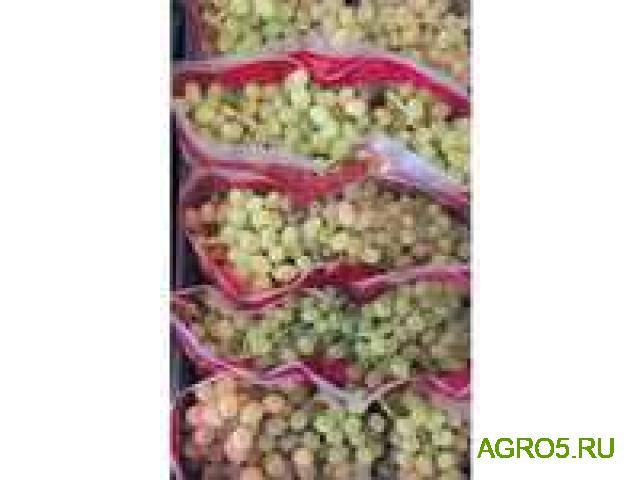 Виноград в Зеленограде