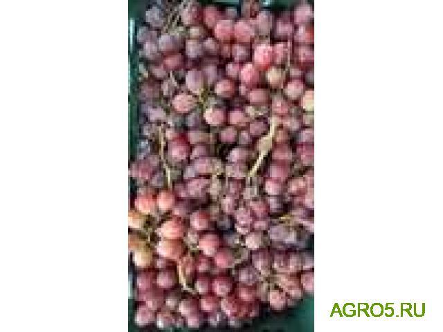 Виноград в Азове