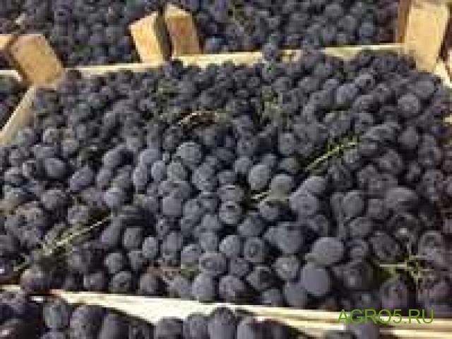 Виноград в Краснодаре