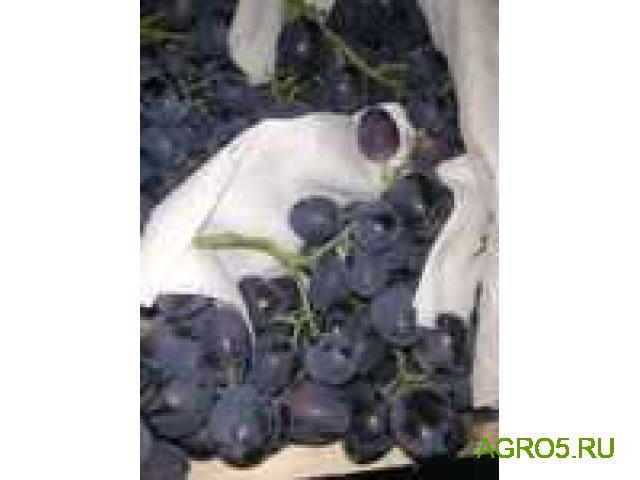 Виноград в Воронеже
