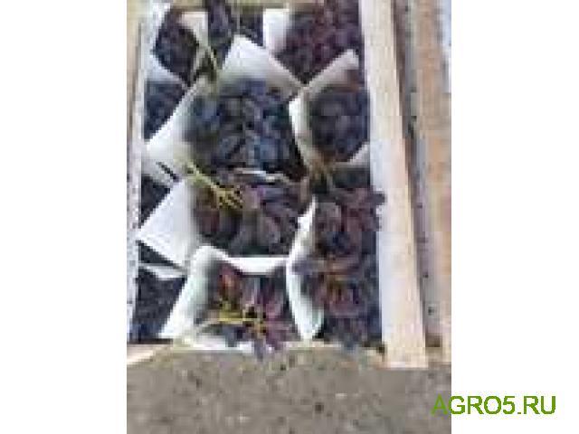 Виноград в Волгограде