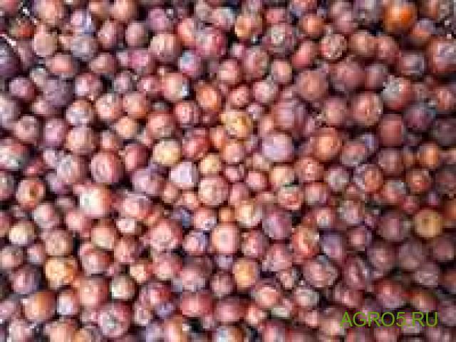 Можжевеловая ягода в Белой Калитве