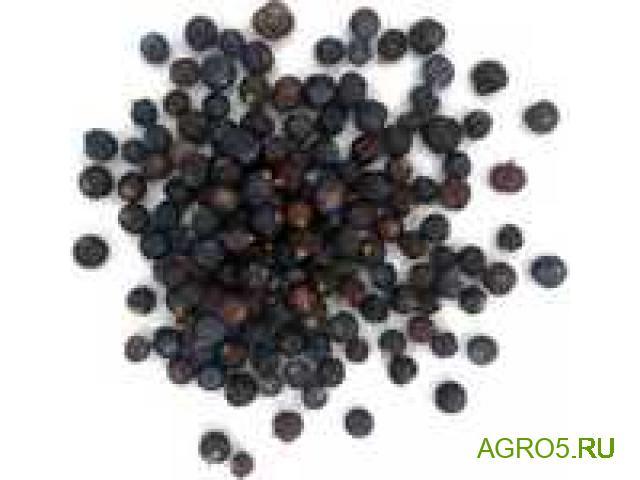 Можжевеловая ягода в Астрахане
