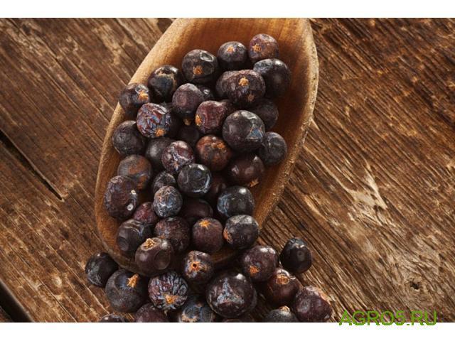 Можжевеловая ягода в Соль-Илецке