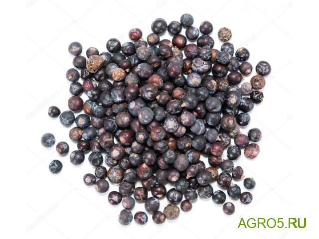 Можжевеловые ягоды новый урожай