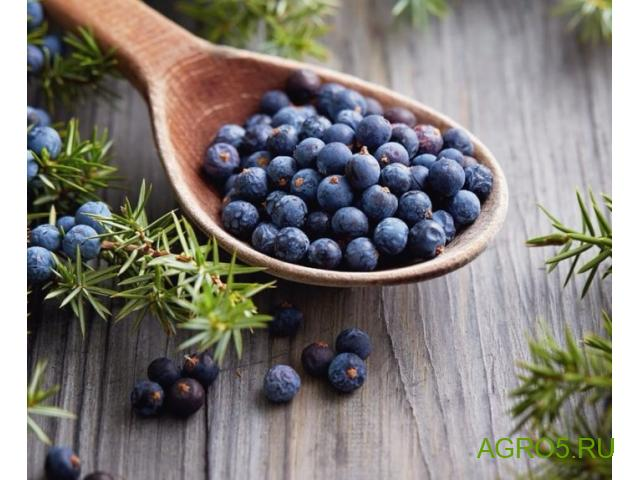 Плоды можжевеловые ягоды