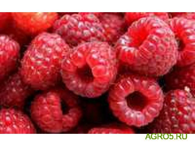 Плоды малина