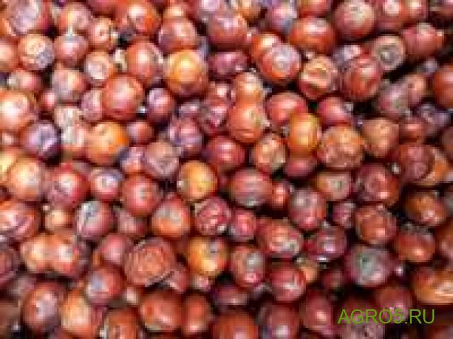Можжевеловая ягода в Гусе-Хрустальном