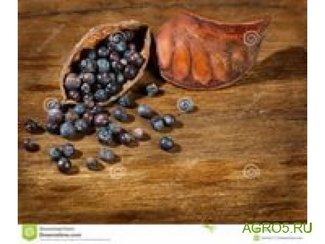 Можжевеловые ягоды