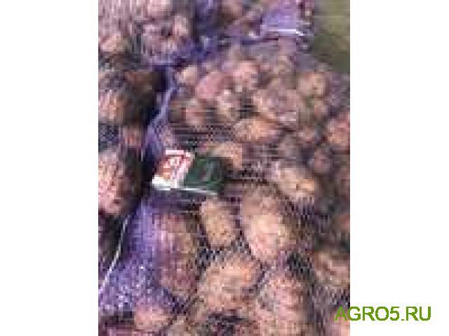 Картофель молодой от производителя