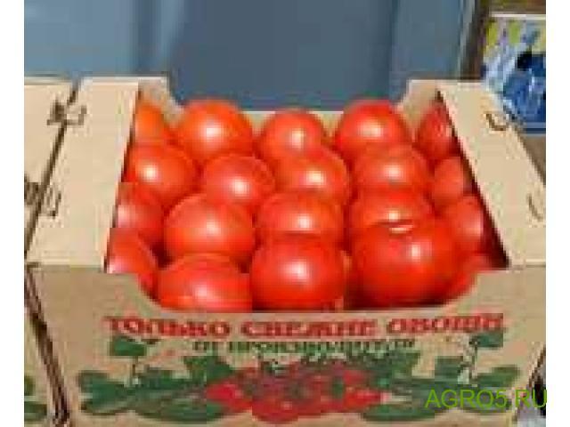 Томаты/помидоры оптом Новосибирская область