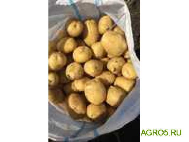 Картофель оптом в Кировской области