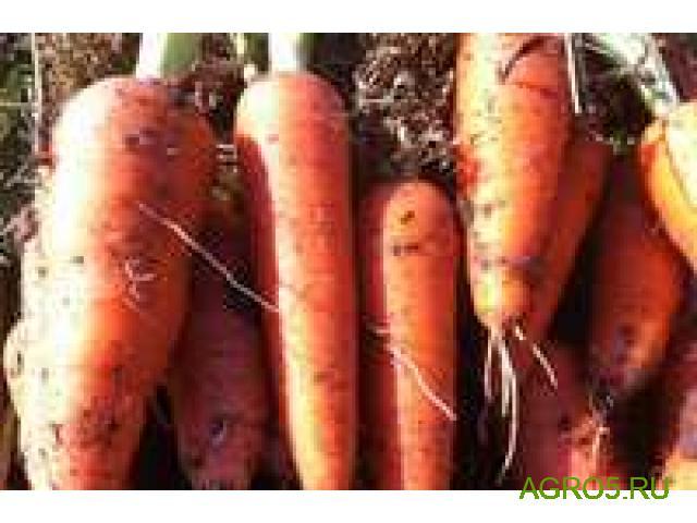 Морковь НОВЫЙ УРОЖАЙ. Уборка 20-25 июля 2020 года