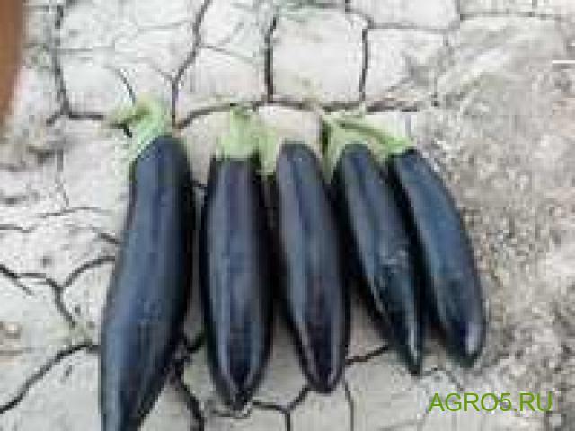 Баклажаны свежие из Армении