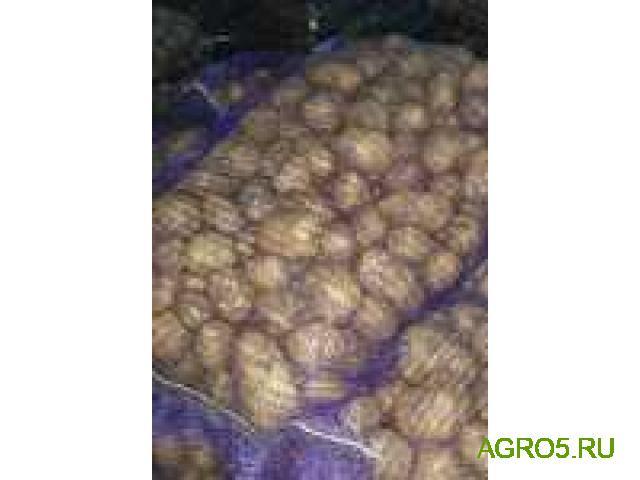 Картофель молодой урожай 2020 экспорт