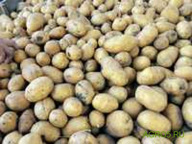 Чипсовые сорта картофеля