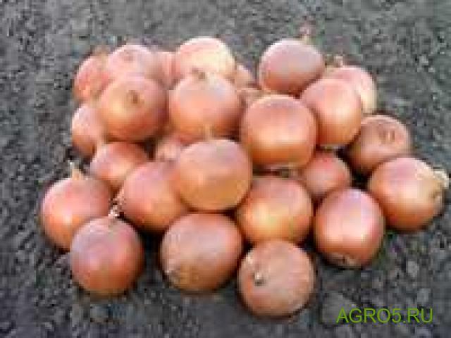 Лук оптом урожай 2020 Омская область
