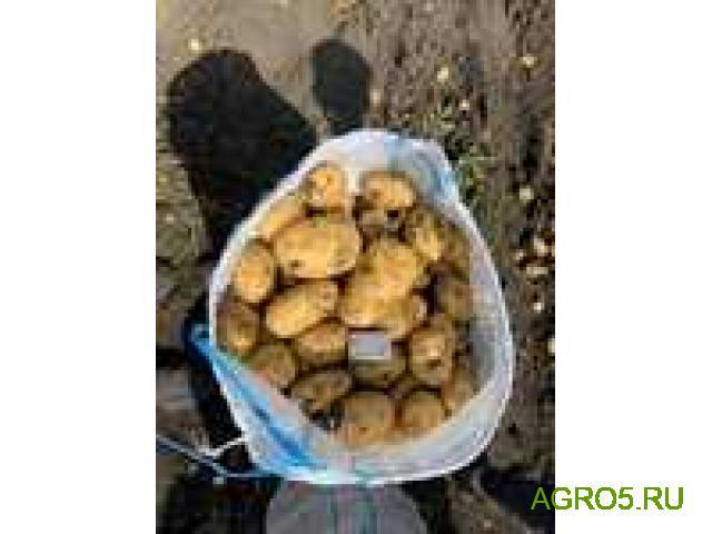 Сетевой картофель