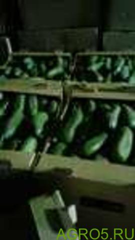 Огурцы в Йошкар-Оле