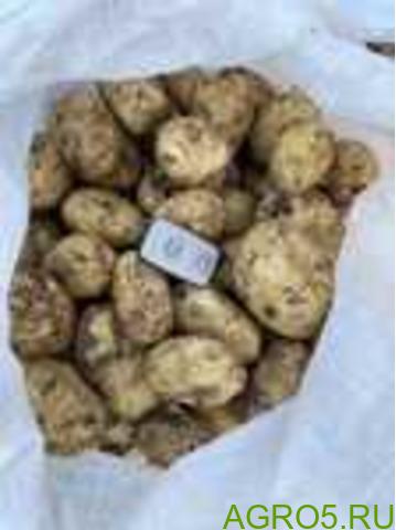 Картофель в Славянске-на-Кубани