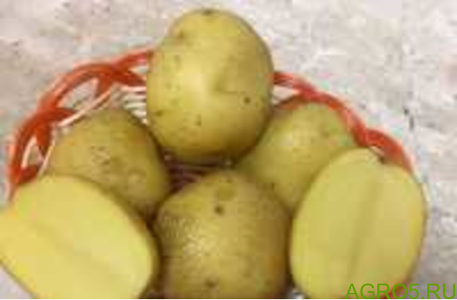 Картофель в Пущино