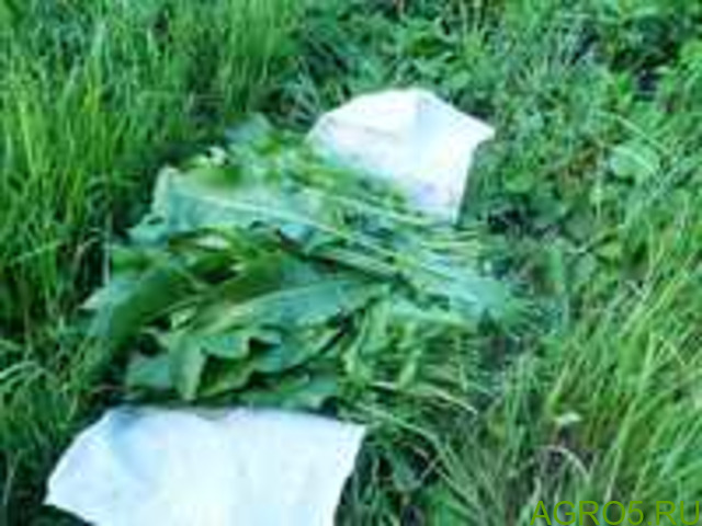 Зелень в Соль-Илецке
