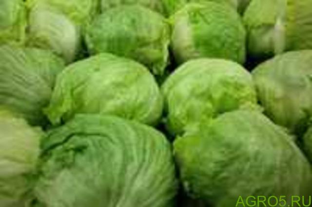 Зелень в Ахтубинске