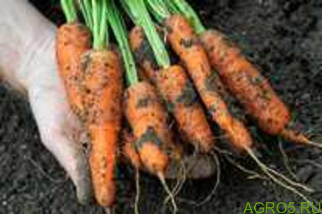 Морковь в Хабаровске