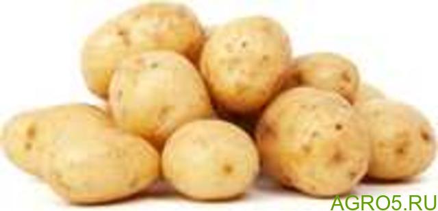 Картофель в Омске