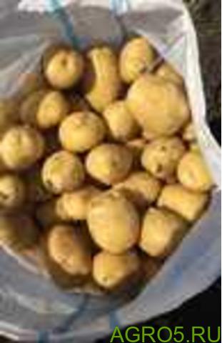 Картофель в Москве
